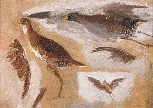 Thomas Cowperthwait Eakins - Studies of Game Birds, probably Viginia Rails